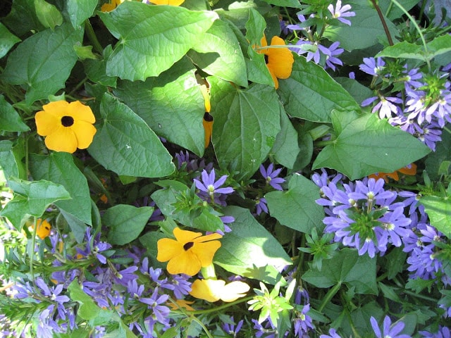 Blomsterarrangement i kurkke, Drøbak