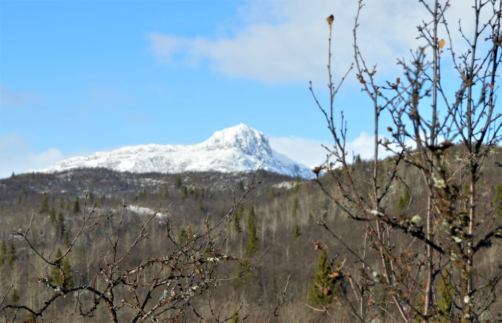 Utsikt mot Bitihorn