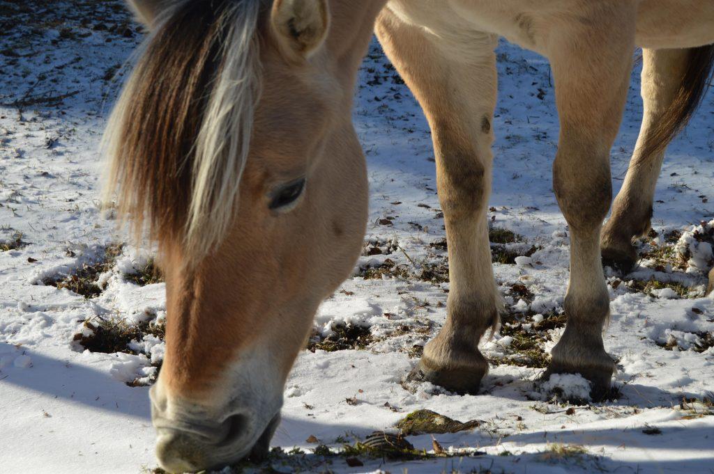 Hest på utsiden av Lyskapellet, Beitostølen