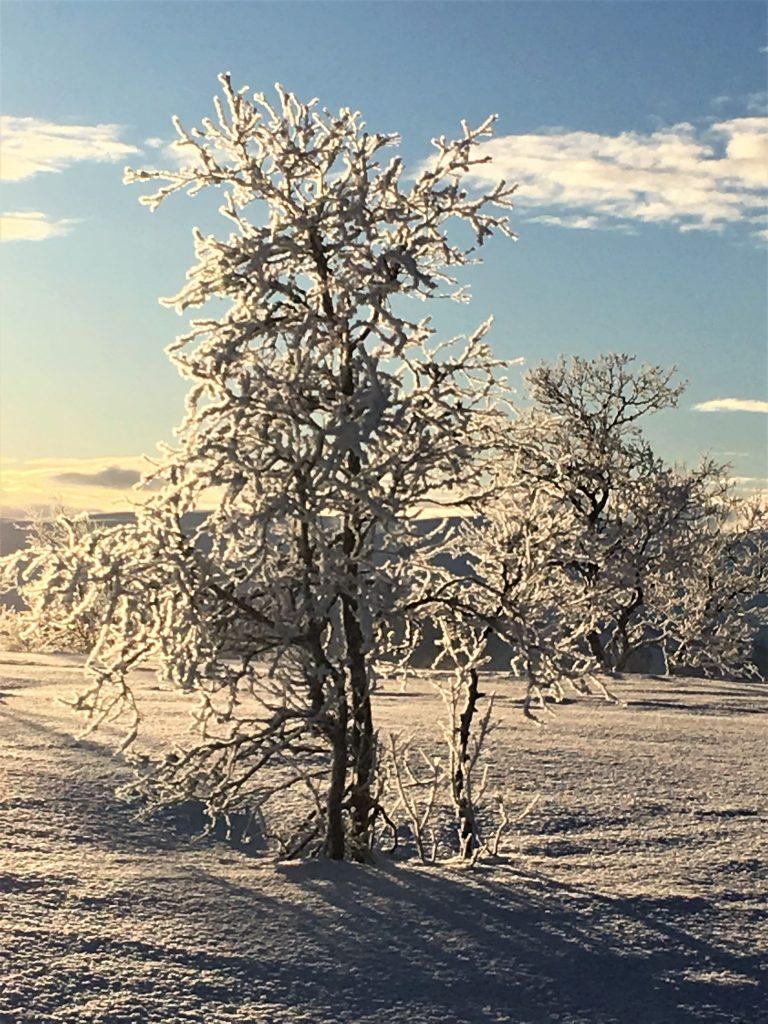 Å nyte Beitostølen med ski på beina. Utsikt over fjellheimen fra GarliSnødekte trær på Garli