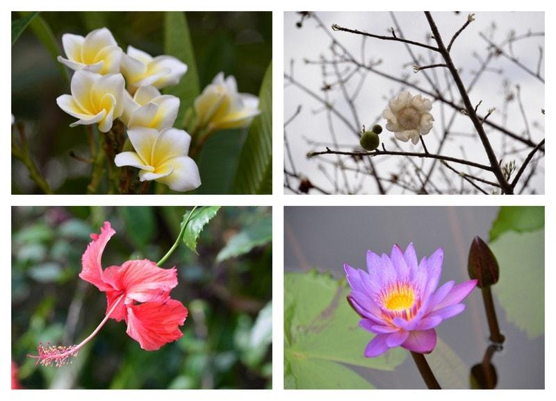 Kollasj, utvalgte blomster ved Victoria Falls