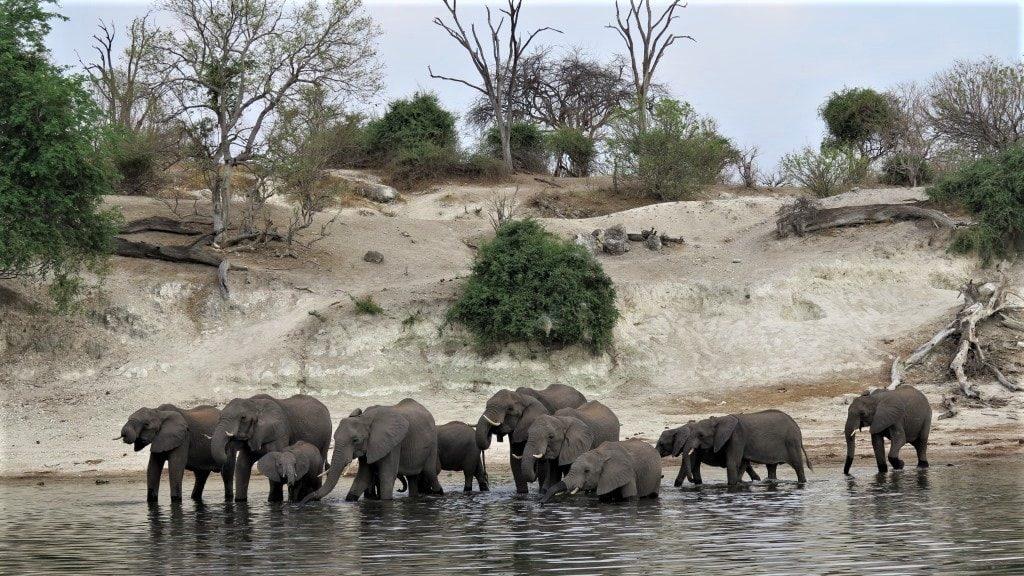 Dyreliv, elefanter ved Victoria Falls