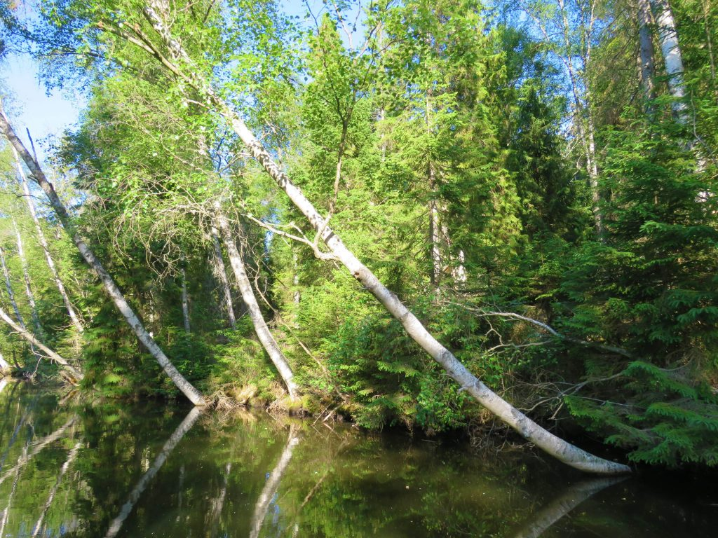 trolske båtturer i Gränna. Langs kanalbredden med trær som speiler seg i vannet.