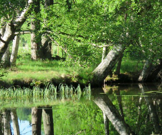 Trosle båtturer i Gränna. Trærne speiler seg i vannet langs kanalen.