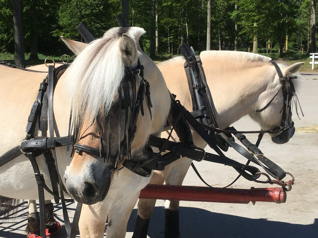 Med hest og kjærre, eller Remmalga som det kalles, Visingsö, Vättern, Småland