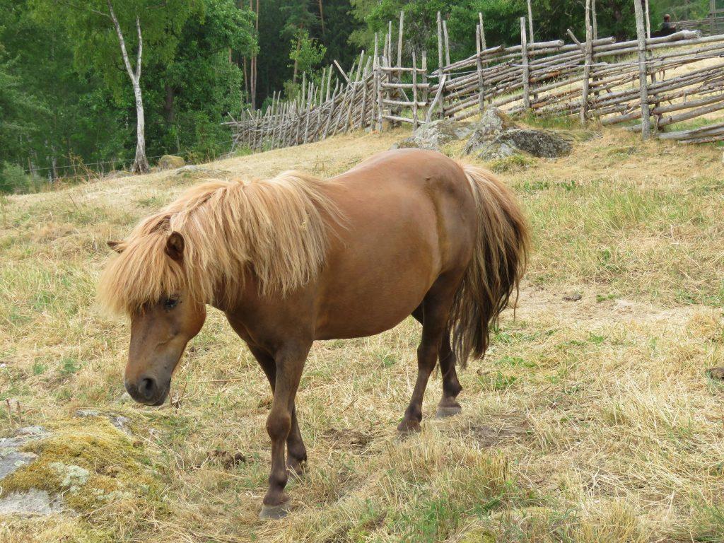 En vakker hest hos Emil i Lønneberget, Katthult