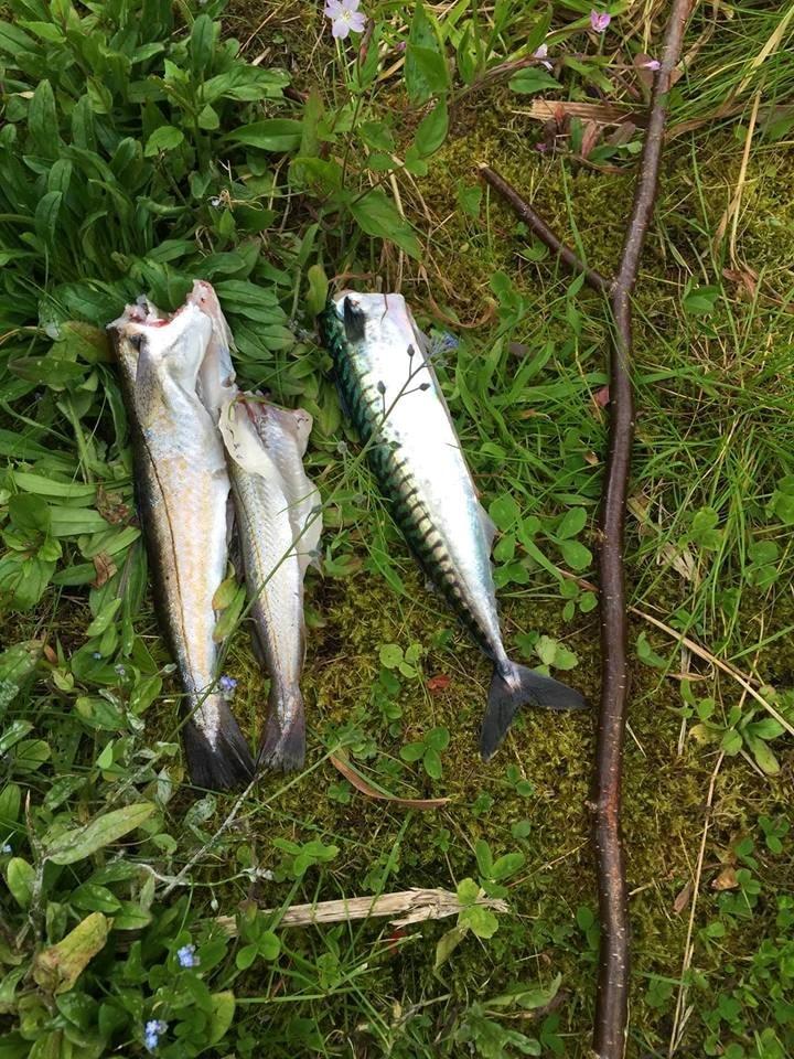 Fisketur på Sunnmøre