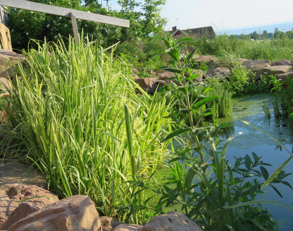 hagedam på utsiden av Uppgrenna Naturhus