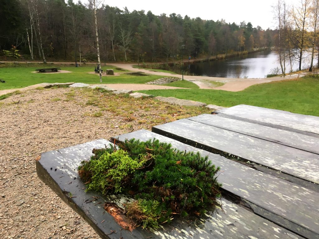 Kortreist tur til bjørneløypa i Fredrikstadmarka - plukke mose