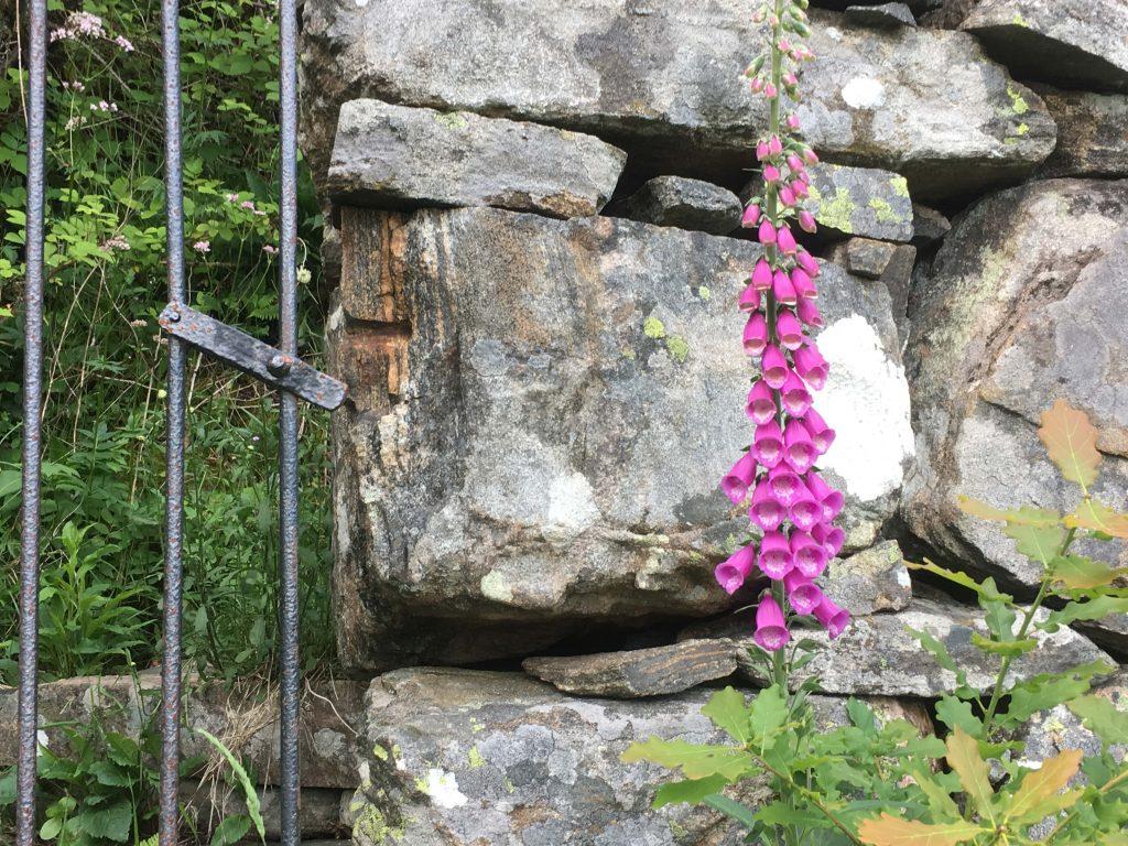 Hemmeligheten til Gina Marie på Svinør avsløres - Nærbilde av porten inn til Gina Maries Kjærlighetshaven, Hammerøy (Svinør)IMG_4515