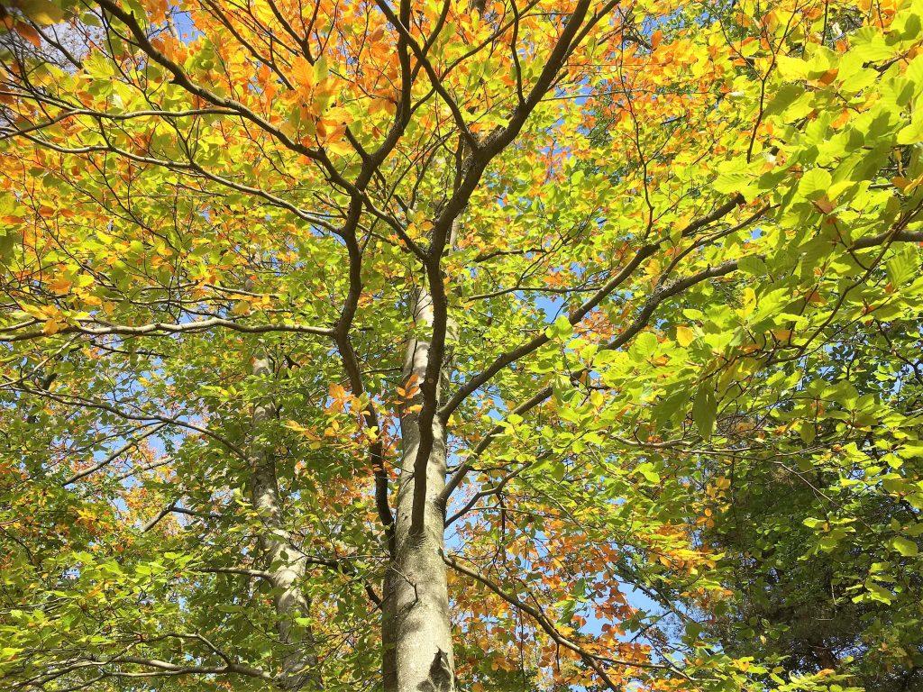 Trær i Fredrikstadmarka
