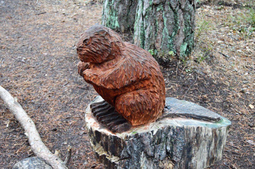 Utskåret bever i bjørneløypa i Fredrikstadmarka