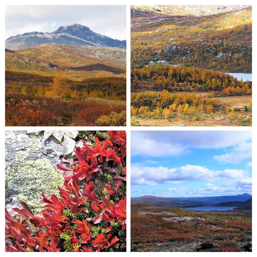 Beitostølen - høsttur i fjellet Kollasj over fager og høsten i fjellet