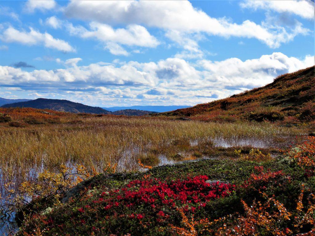 Beitostølen - høsttur i fjellet Vakre farger mot fjell og vann