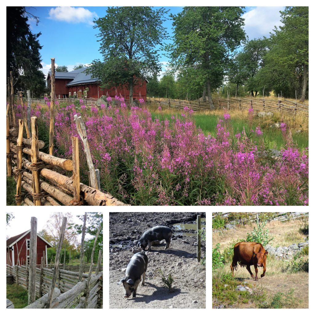 Ta barna med til Åsens by. Kollasj fra området med bygninger, blomster og dyr. Urbantoglandlig