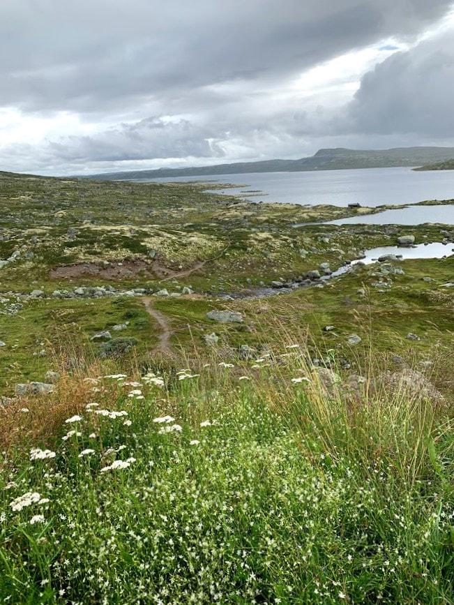 Over Hardangervidda med uttallige naturinntrykk IMG_2695 (2)-min