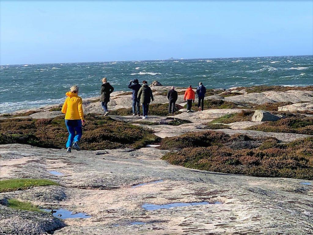 Turfølget som nøt Amerika på Hvaler denne vindfulle dagen IMG_3522 (2)