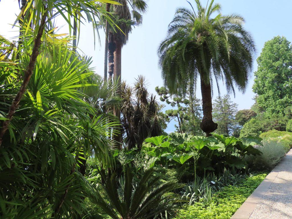 Planter og trær i den botaniske hagen rundt Villa Carlotta