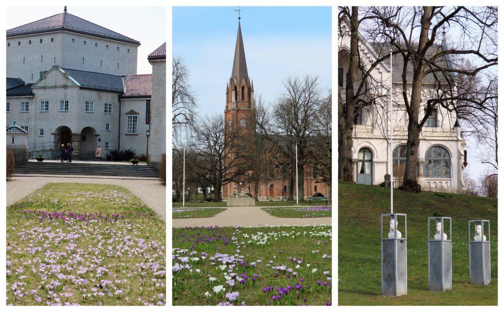 Krokusen blomstrer utenfor biblioteket, Domkirken og Rådhuset - kollasj