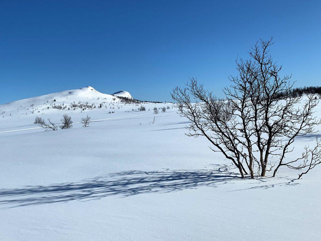 Vakker natur med snø på - Garli på Beitostølen