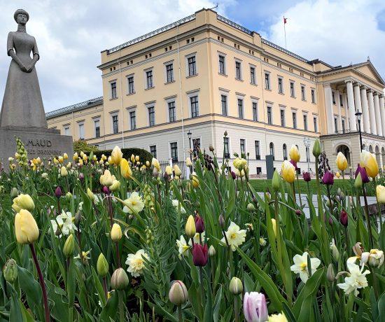 På rusletur i Oslo - vårblomstring i Karl Johansgate - blomstring rundt dronning Maud ved slottet