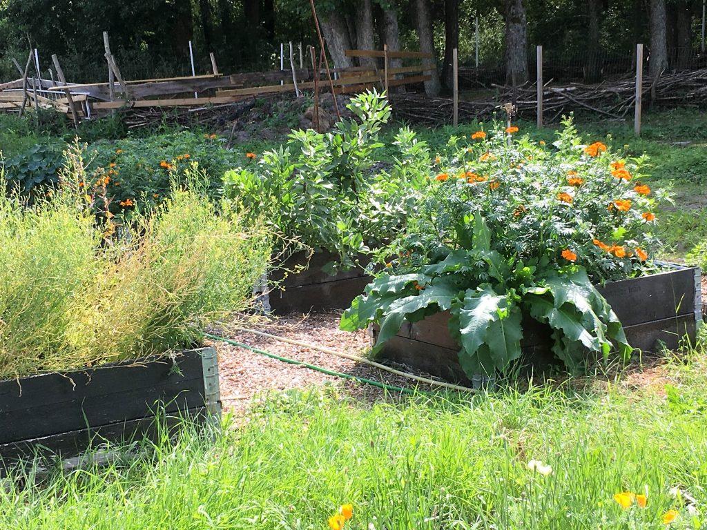 Blomster og grønnsaksdyrking på Makø
