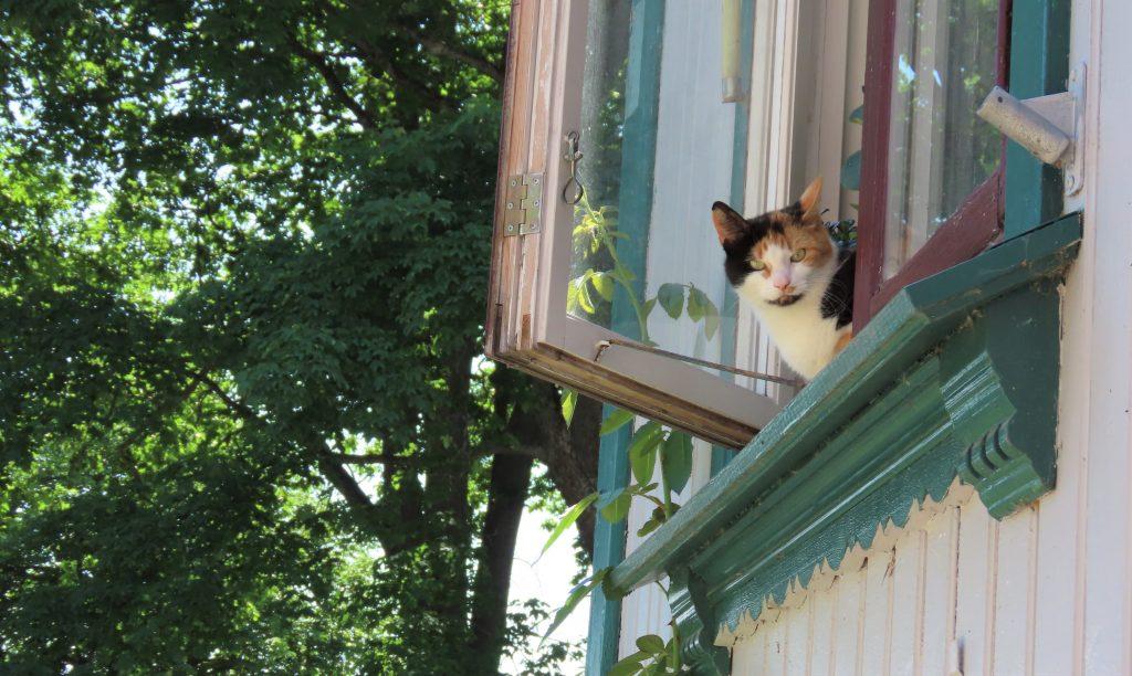 Ikke glem å ta en titt opp i boligvinduenelangs gatene - her titter en kattepus ut