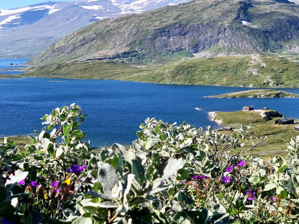 5 opplevelser på Beitostølen i løpet av en langweekend - Ikke glem å nyte den norske floraen på fjellturene