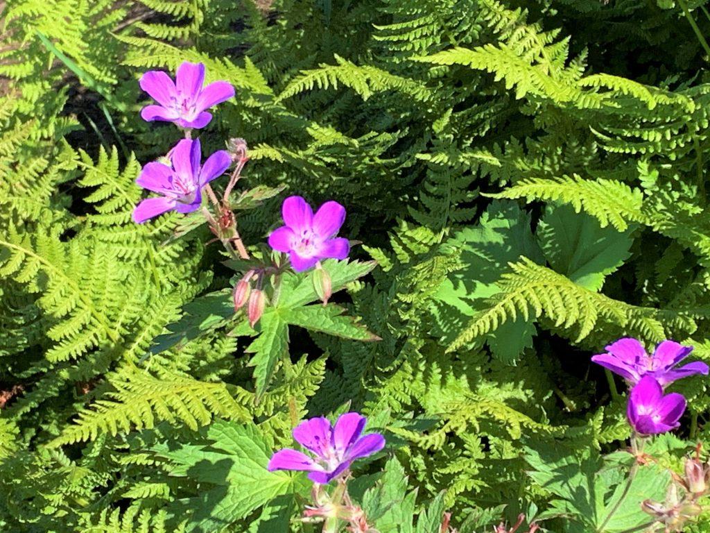 Herlig flora i den første delen opp og ned av Bitihorn