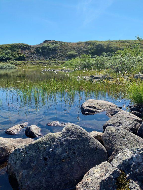 Vinstervatn byr på vakker natur og beitende dyr - Et vakkert tjern vi hvilte ved