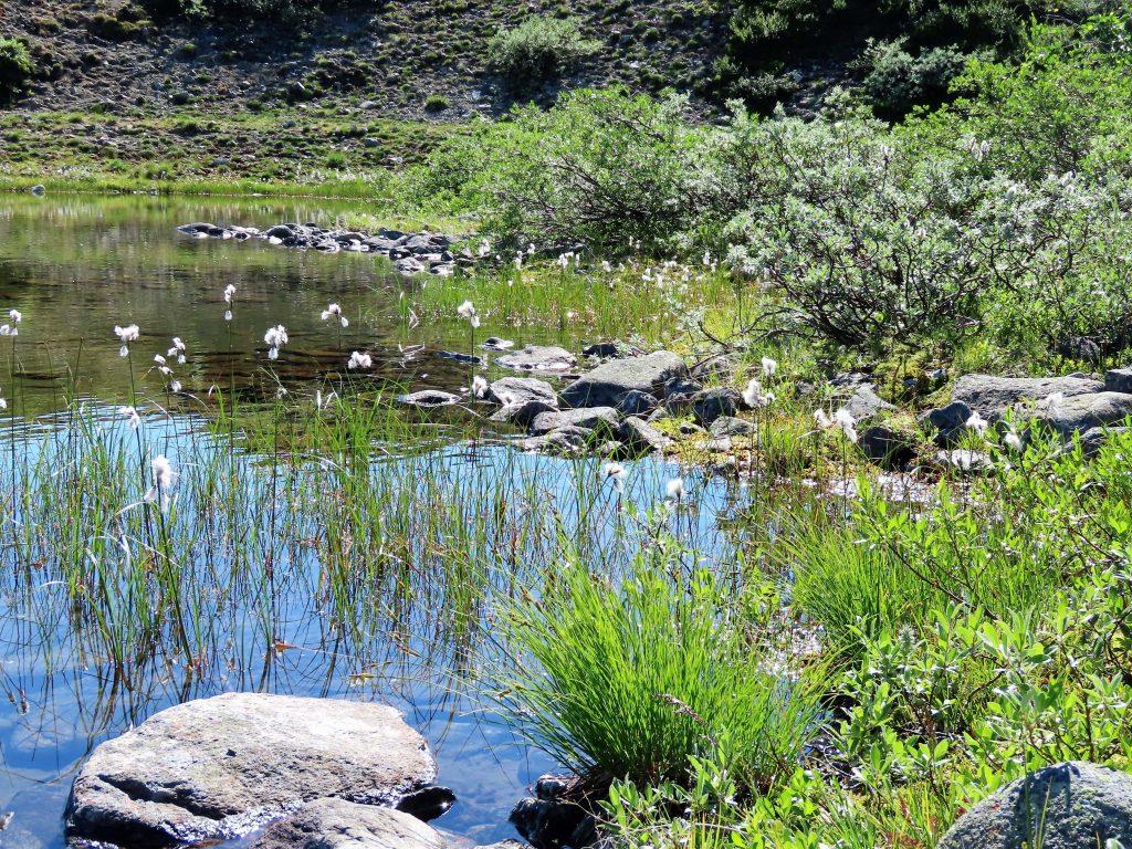 Vinstervatn byr på vakker natur og beitende dyr - vannet vi rastet ved