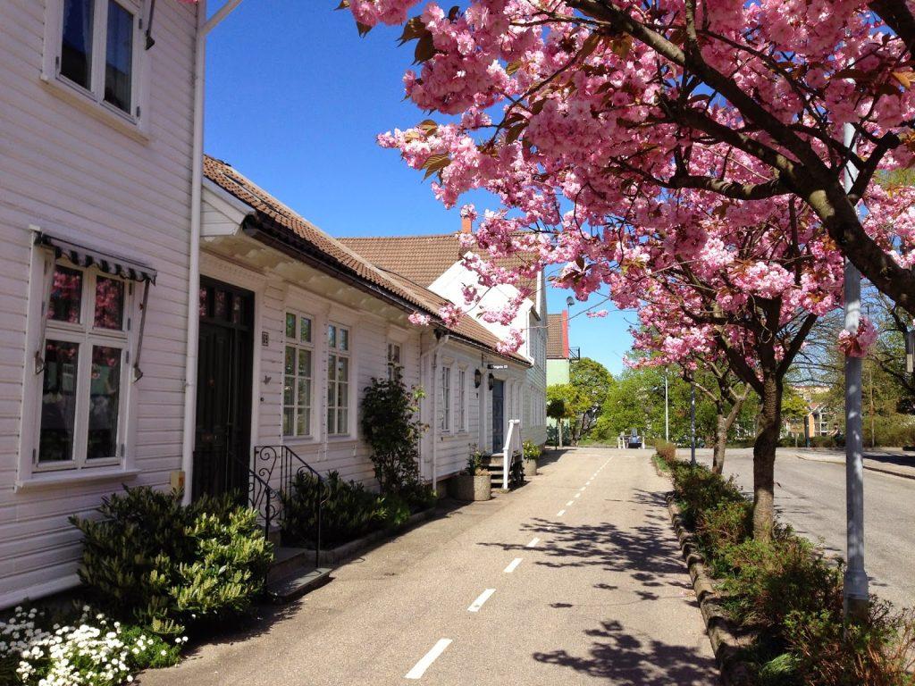 Foto E. Høibo-Visit Sørlandet - Posebyen i full blomstring