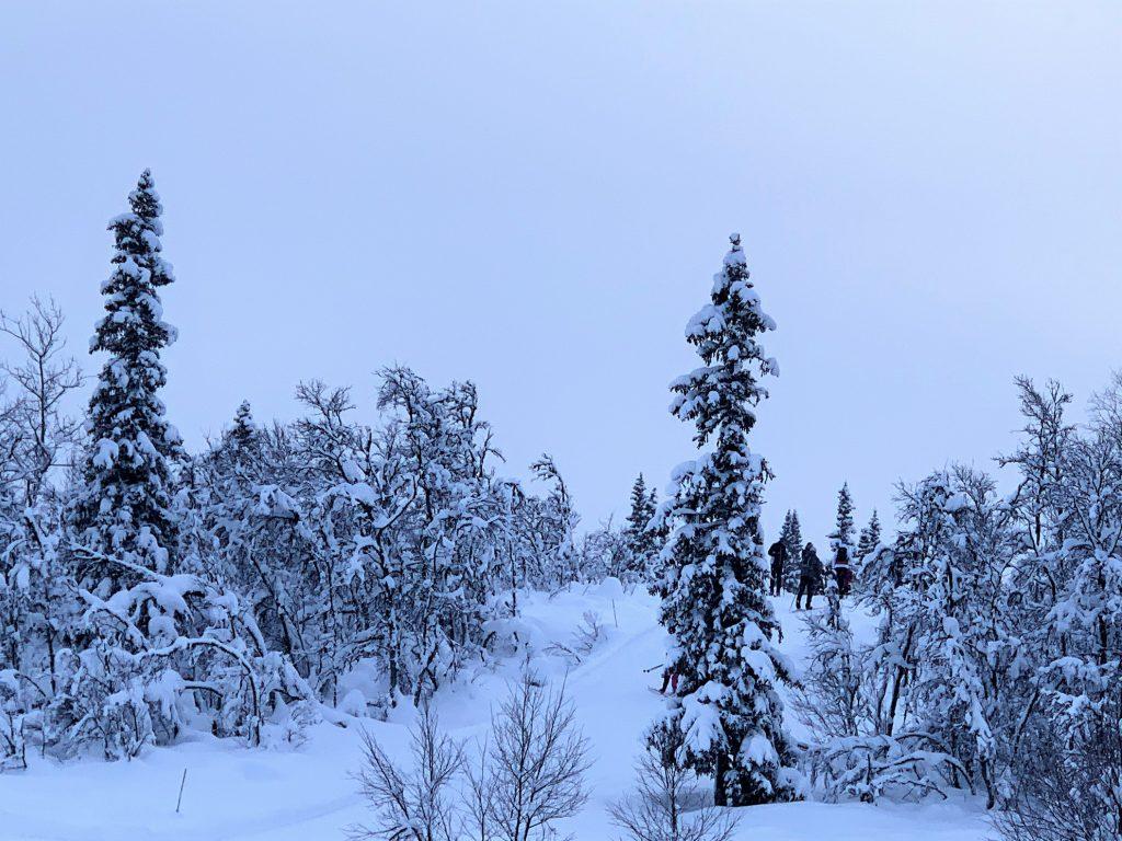 Magiske vinterdager på Beitostølen - Kontraster i grått lys