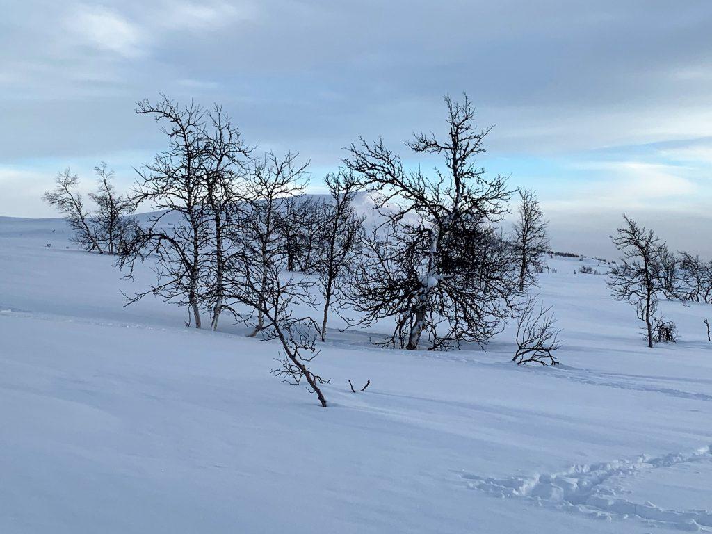 Magiske vinterdager på Beitostølen - legg merke til snøen