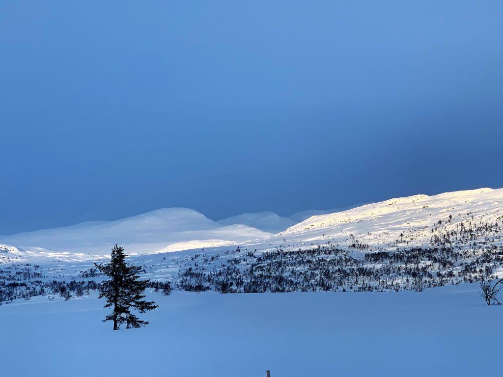 Magiske vinterdager på Beitostølen - lys og skygge i naturen