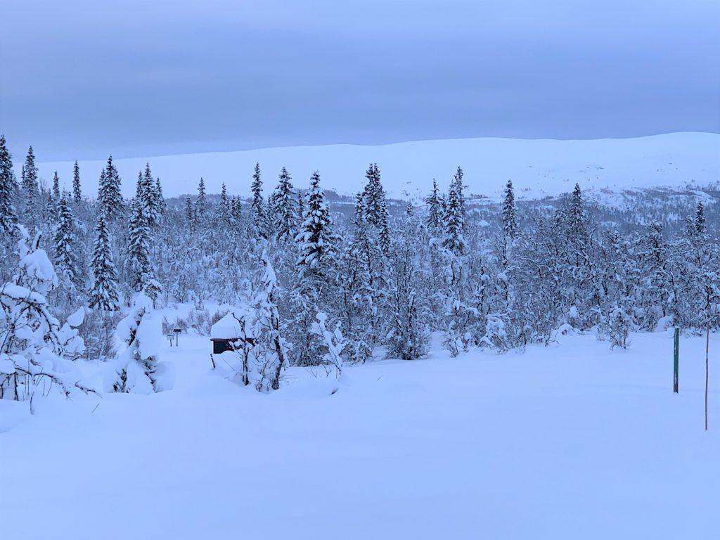 Magiske vinterdager på Beitostølen - så usigelig vakkert i naturen der
